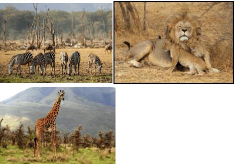 Lake Manyara Animals