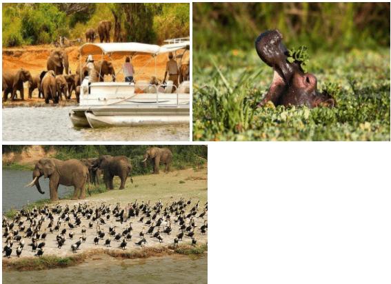 Mweya safari