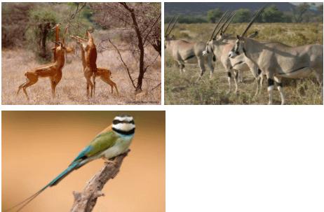 Samburu animals