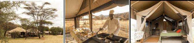 Serengeti wildlife camp